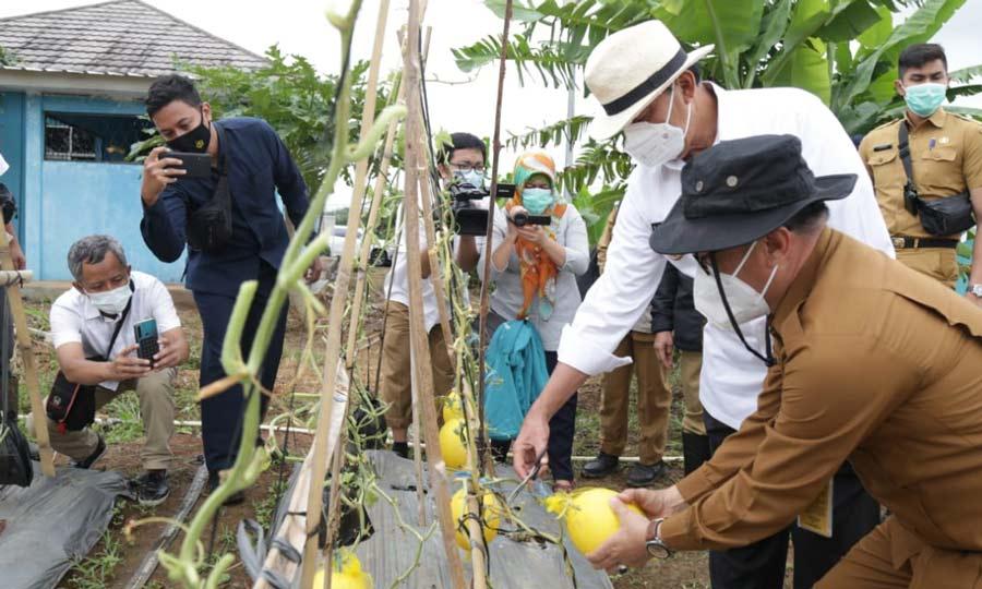 Perkuat Pertahanan Pangan, Sektor Pertanian jadi Perhatian Pemprov Banten