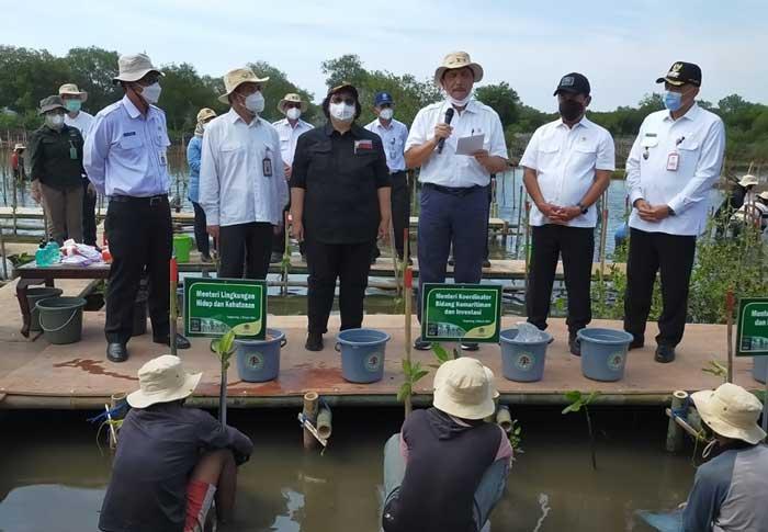 Bupati Tangerang Dampingi 4 Menteri RI Tanam Mangrove di Teluknaga